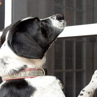 PetScreen<sup>®</sup> – Haustiersichere Schutzgitter